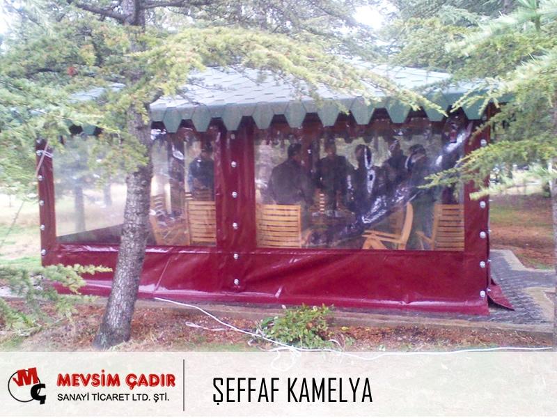 Şeffaf Kamelya